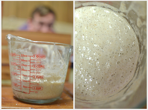 Sourdough starter - Day 7 pm