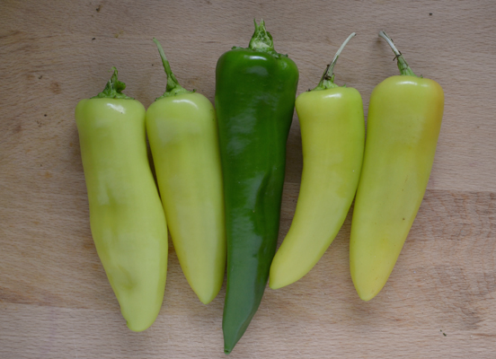 Hot peppers from the garden